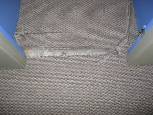 Berber Tears In Carpet From Cat Curlys Carpet Repair