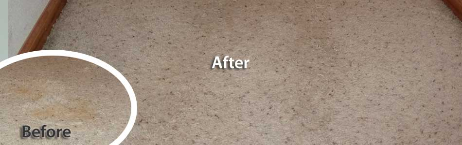 Pet carpet damage repair